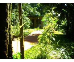 Cabañas Luces de la Selva